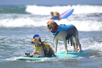 Helen Woodward Animal Center's Surf Dog Surf-A-Thon presented by Blue Buffalo splashes onto Del Mar Dog Beach on Sunday, Sept. 12, 2021. Helen Woodward's annual Surf Dog competition, established in 2005, was the first-of-its-kind to turn 'dogs on surfboards' into a platform to raise life-saving funds. 100 percent of the proceeds from the event support the life-saving work at Helen Woodward Animal Center.